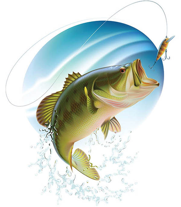 600x686 Largemouth Bass' Hunting. Vector Illustration Workflow. Pesca