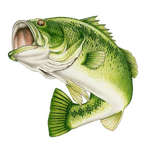 500x518 Wide Mouth Bass Clip Art Wildlife Art Stained Glass Patterns