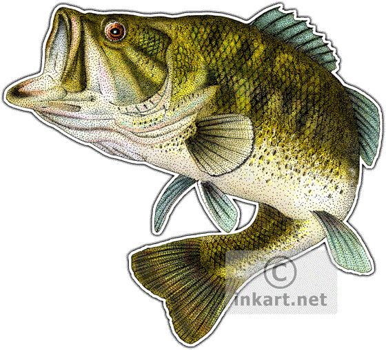 560x509 Wildlife Art Freshwater Sports Fish