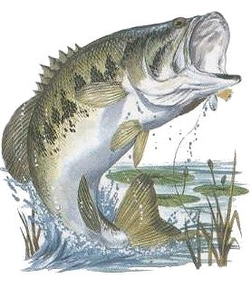 277x318 Best Fish Recipes Cod Fish Recipes, Bass And Markers