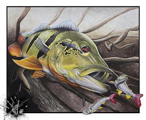 300x247 Bass Fishing Drawings Fine Art America