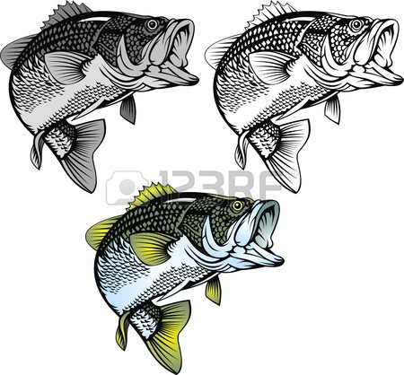 450x418 Bass Fishing Stock Photos. Royalty Free Business Images