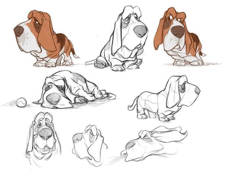 736x559 Basset Hound Illustration Basset