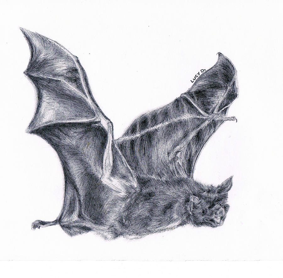 900x885 Bat Drawing By Lucy D