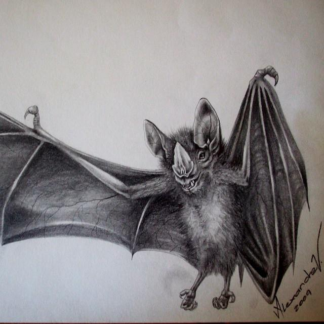 640x640 Bat Drawing. Animals. Drawings. Pictures. Drawings Ideas For Kids