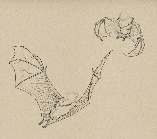 600x531 How To Draw Animals Bats