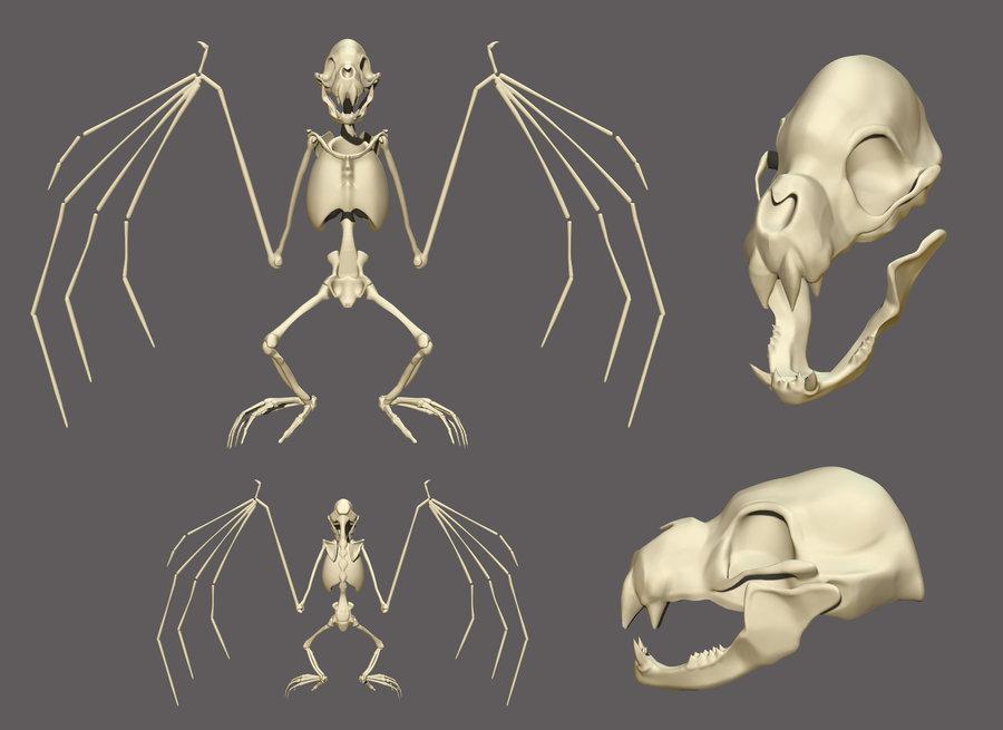 900x655 3d Bat Skeleton By Nemonova