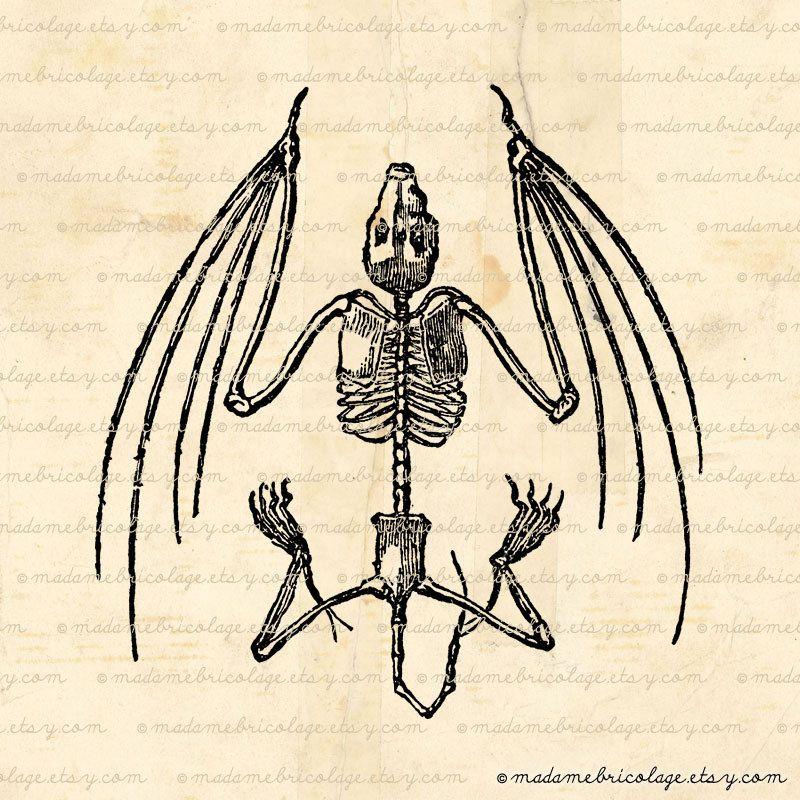 800x800 Bat Skeleton Bones Anatomy Digital Image By Madamebricolage