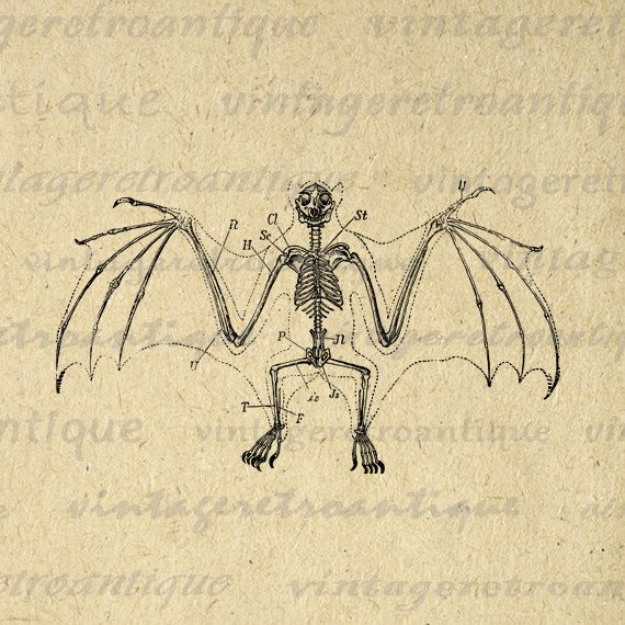 570x570 Bat Skeleton Digital Printable Download Halloween Image Graphic