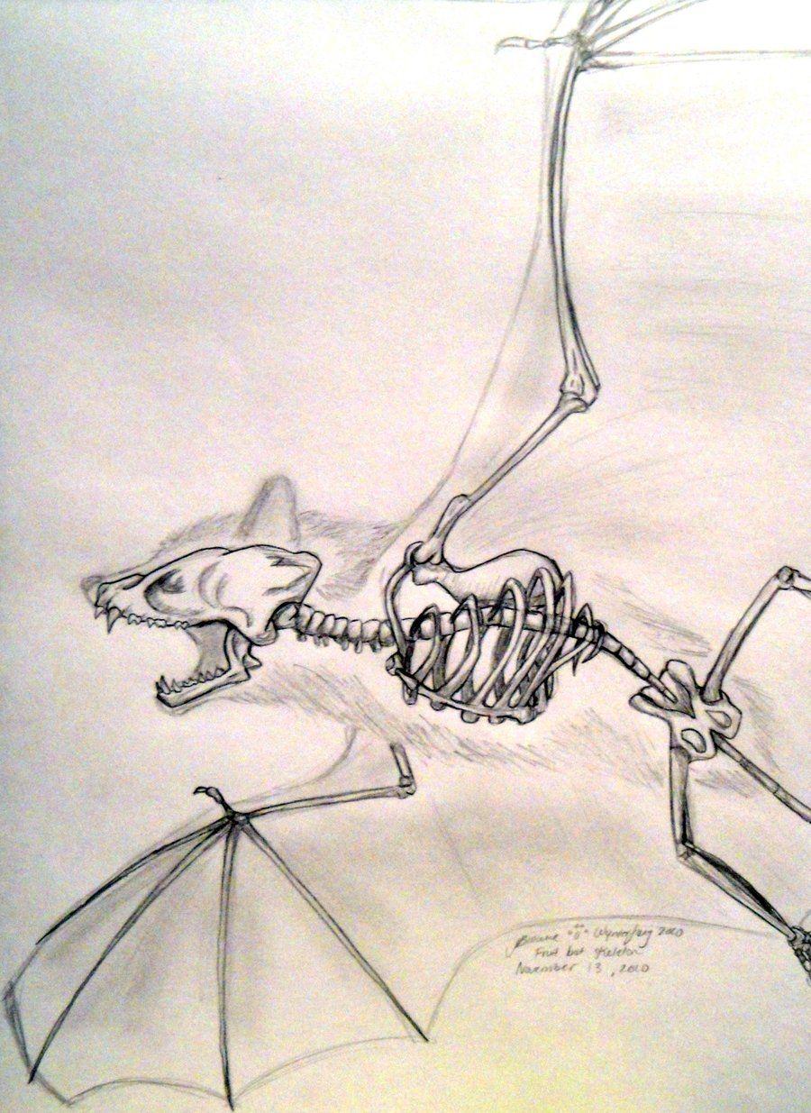 900x1235 Bat Skeleton Drawing Bat Skeleton Drawing Bat Tattoos