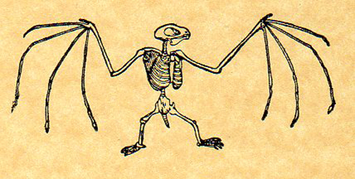 500x253 Bat Skeleton Rubber Stamp