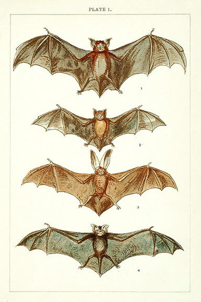 400x600 Bat Illustration Thinking Tattoos Bats