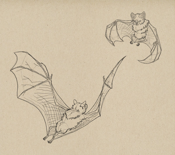 600x531 How To Draw Bats Done Well You Know My Name Is Simon