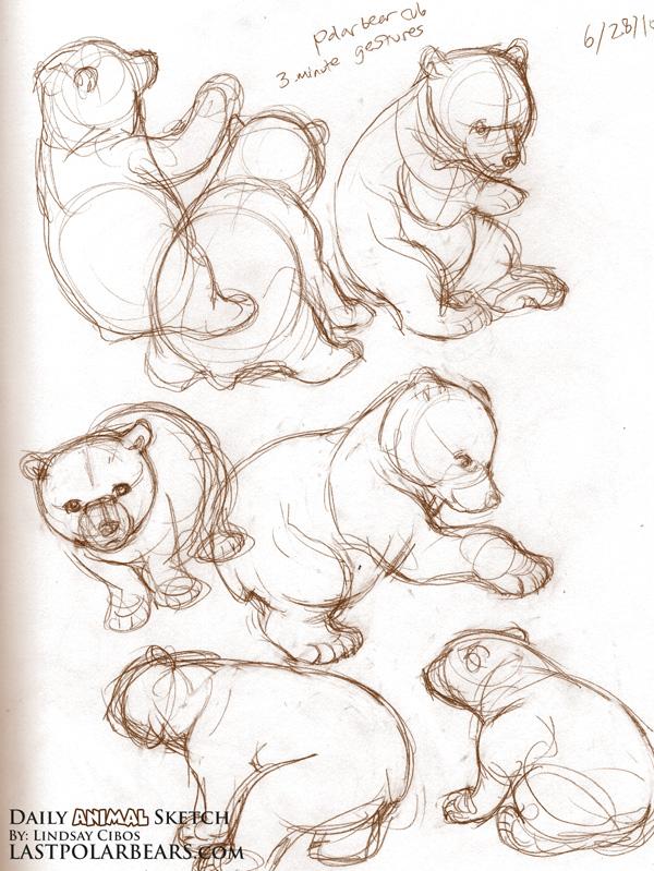 600x799 Daily Animal Sketch Polar Bear Cub Last Of The Polar Bears