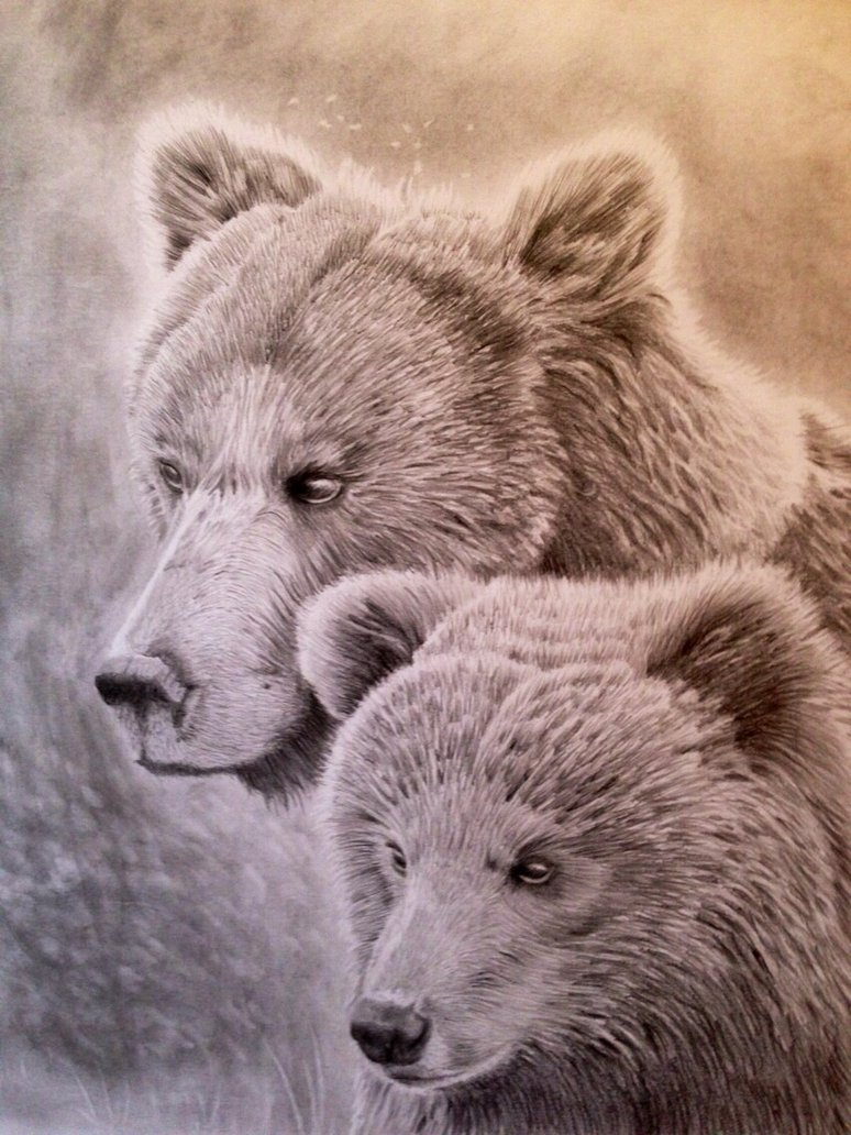 774x1032 Grizzly Bear And Her Cub Pencil Portrait By Ned The Hat