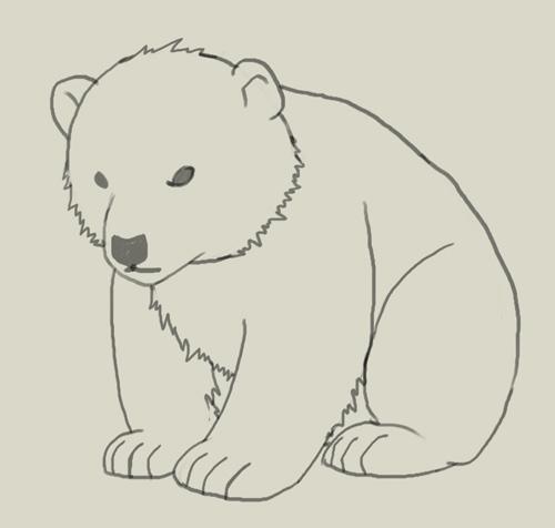 500x476 How To Draw Polar Bear Cub