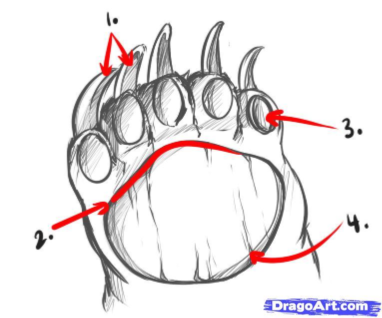 Bear Paw Diagram House Wiring Diagram Symbols