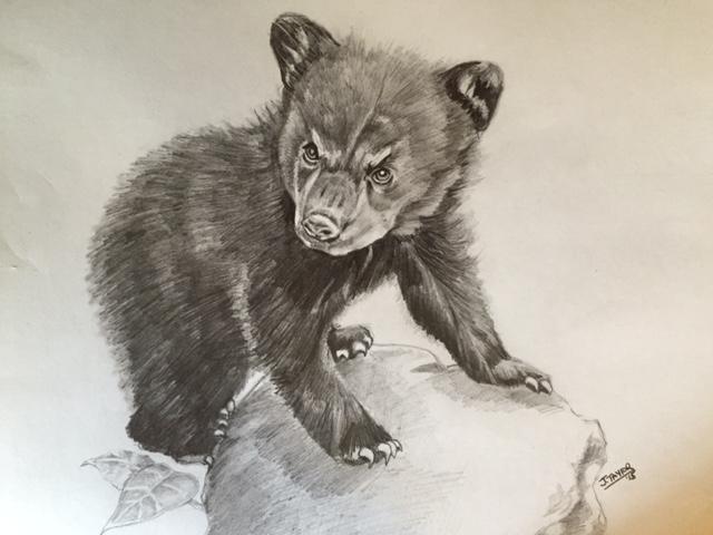 640x480 Bear Cub Sketch By Noahstormcrow