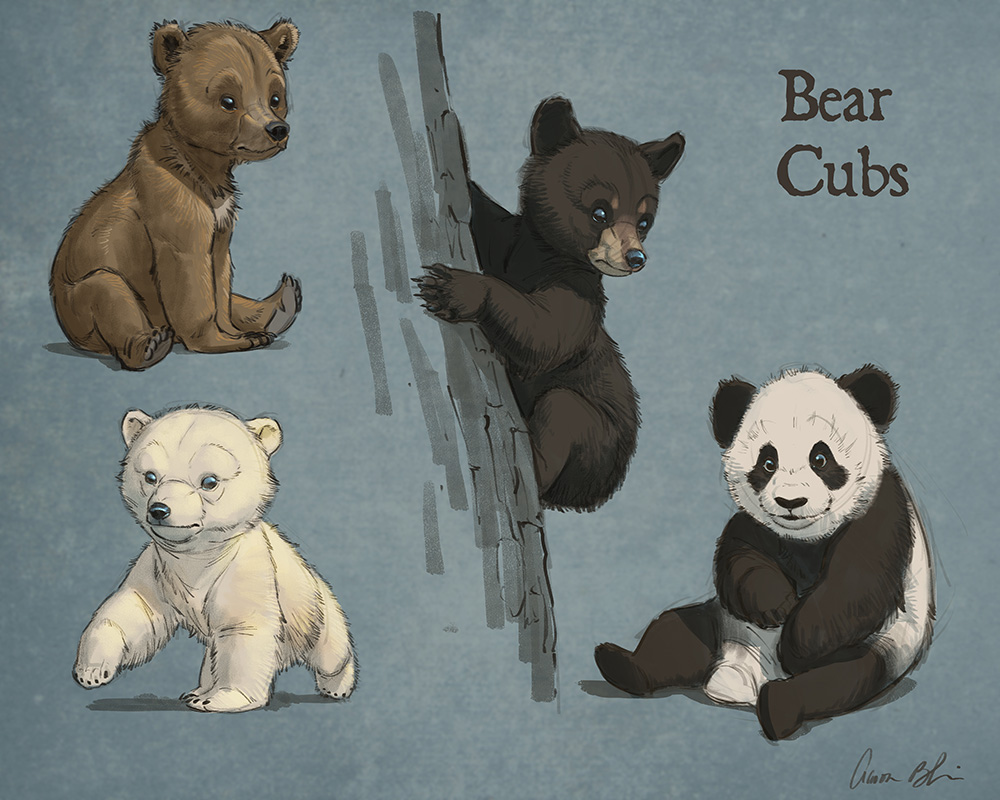 1000x800 How To Draw Bears