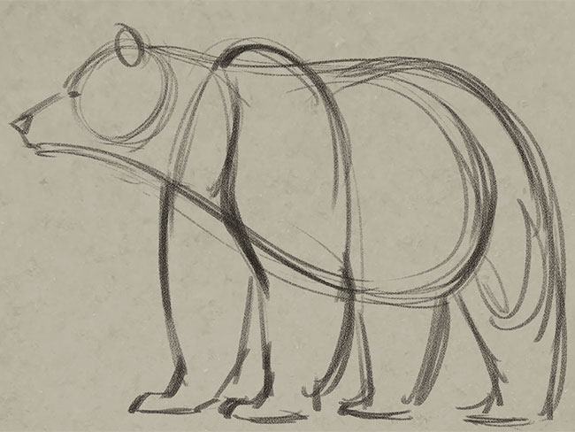 650x488 Learn How To Draw A Bear From A Pro Boys' Life Magazine