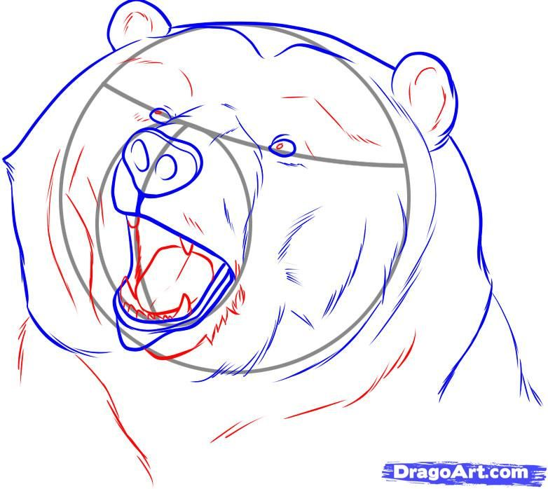 782x698 Bear Drawings How To Draw A Realistic Bear, Draw Real Bear