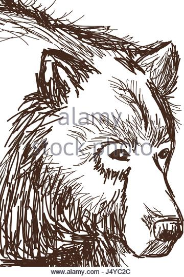 360x540 Bear Face Cartoon Animal Stock Vector Images