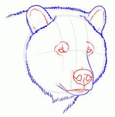 236x240 How To Draw Grizzly Bears