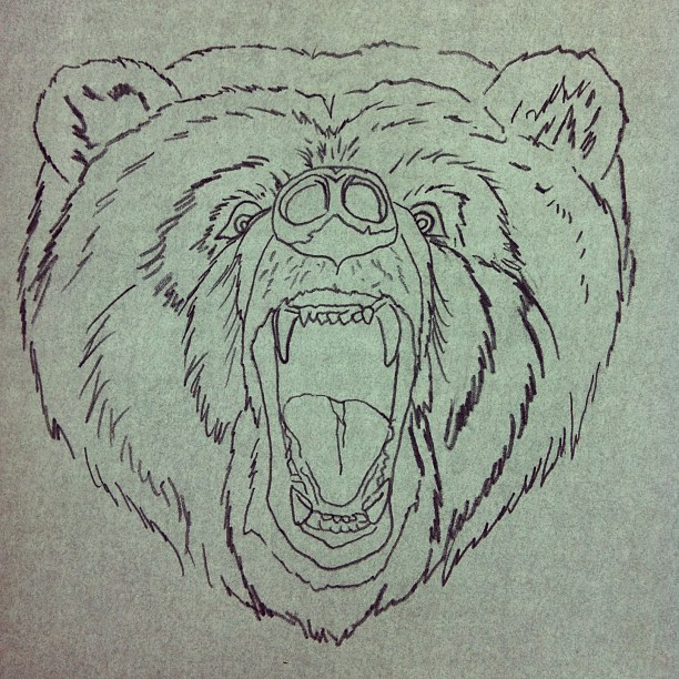 Bear Head Drawing at GetDrawings com | Free for personal use