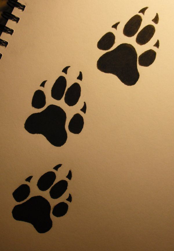 Bear Paw Print Drawing at GetDrawings com | Free for