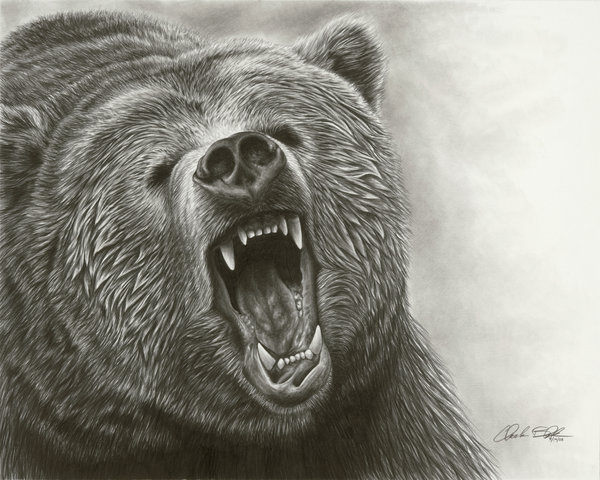 600x480 Drawn Bear Roar