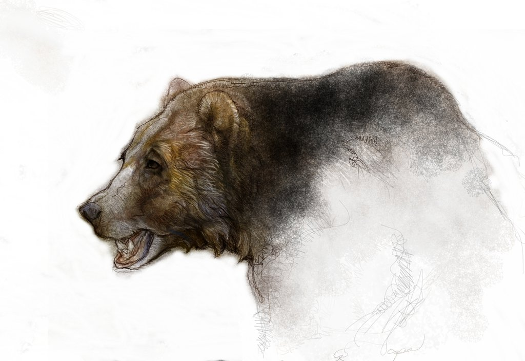 1024x703 Kodiak ,grizzly,brown Bear Sketch By Kevinnichols