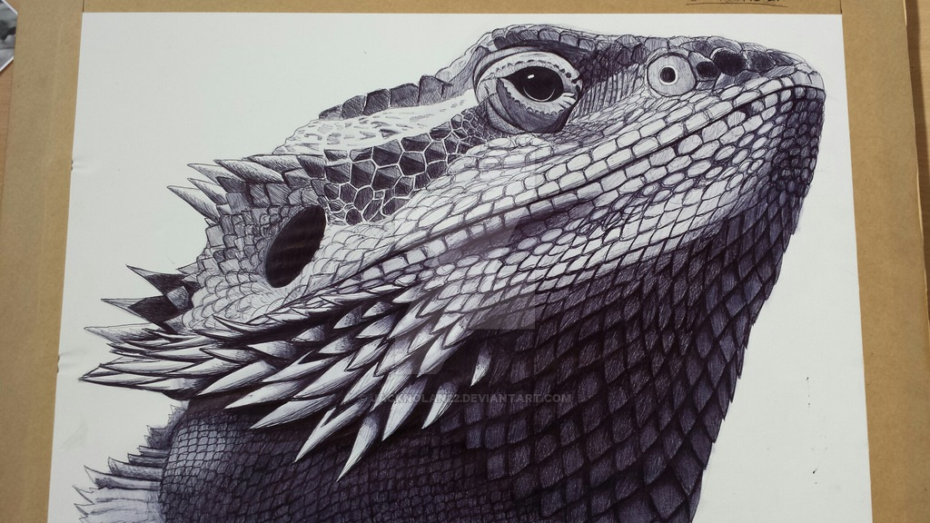 1024x576 Bearded Dragon 6 Hour Biro Drawing By Jacknolan22