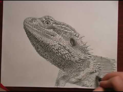 480x360 Bearded Dragon Speed Drawing