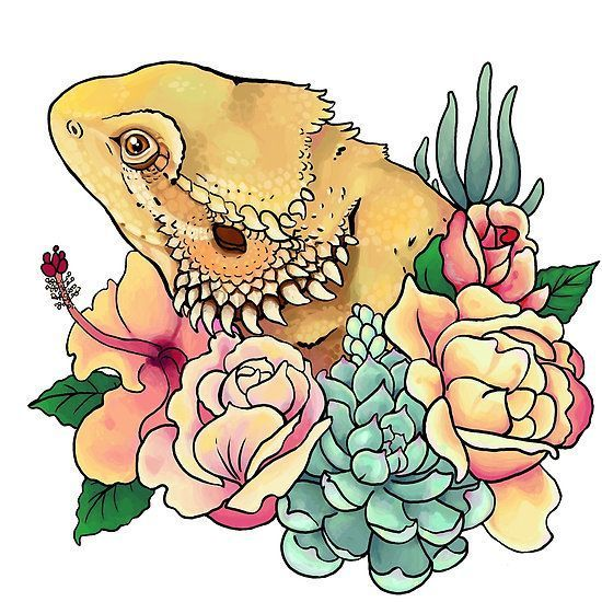 550x550 Image Result For Cute Bearded Dragon Drawing