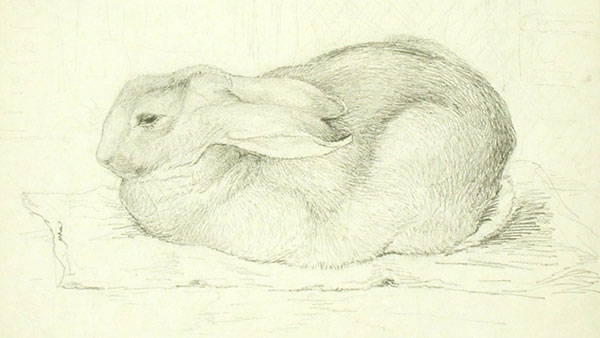 600x338 Between Naturalism And Fantasy The Art Of Beatrix Potter Royal