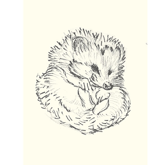 564x564 Pin By Val Hagerty On Art Hedgehogs