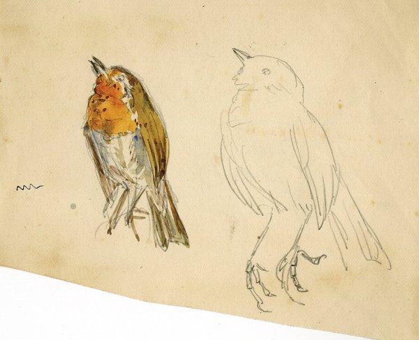 600x488 Beatrix Potter Drawings 72 Beatrix Potter Drawing Of Robin