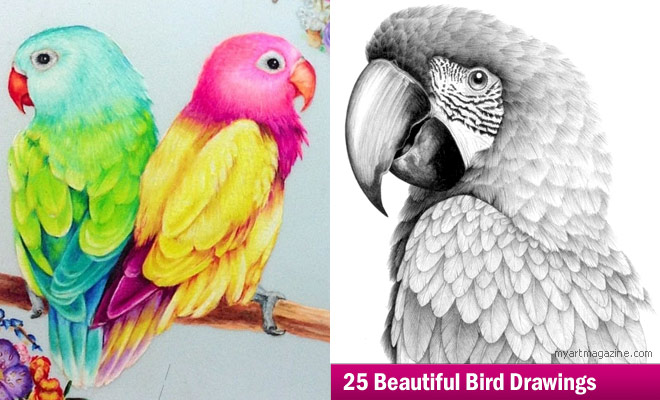 660x400 25 Beautiful Bird Drawings And Artworks From Around The World