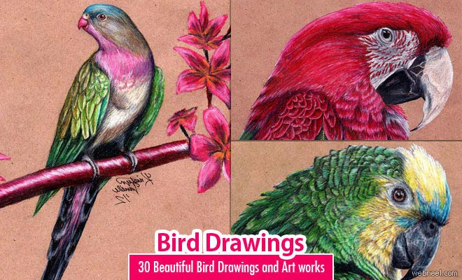 660x400 40 Beautiful Bird Drawings And Art Works For Your Inspiration