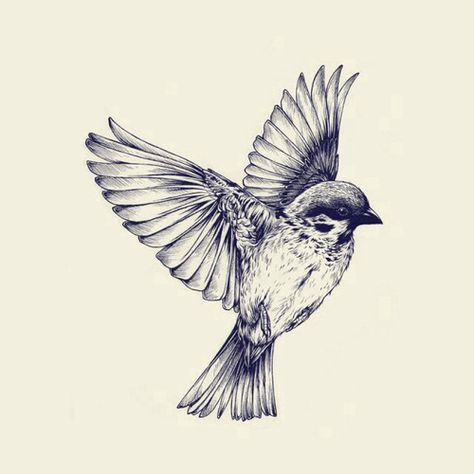 474x474 Beautiful Bird Drawing Tats Beautiful Birds