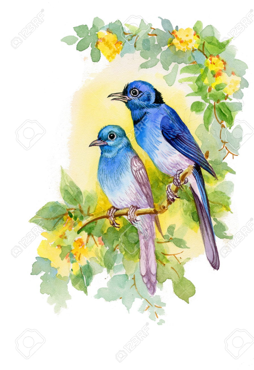 893x1300 Drawing Of Beautiful Bird Drawing Of Beautiful Bright Birds