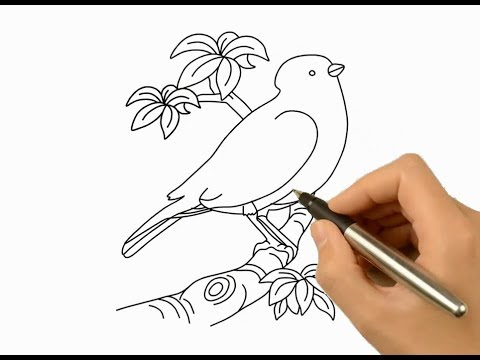 480x360 How To Draw A Beautiful Bird And Coloring Idea, Drawing Ideas