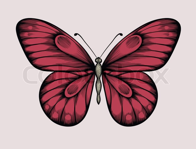 800x609 Beautiful Butterfly In Vintage Style. Hand Drawn Contour Lines