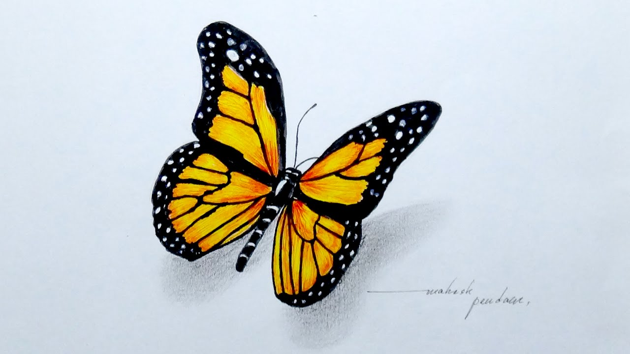 1280x720 Drawing A Beautiful Butterfly