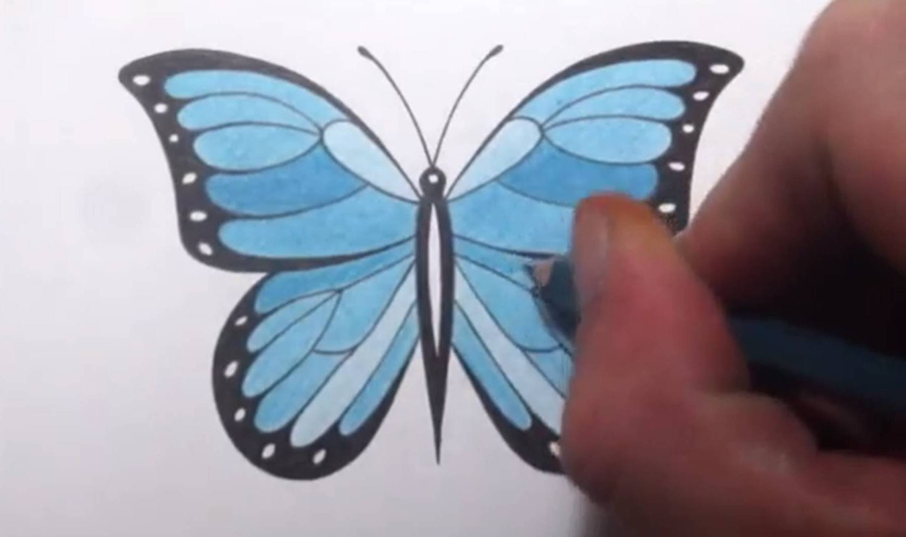 1779x1055 How To Draw A Butterfly