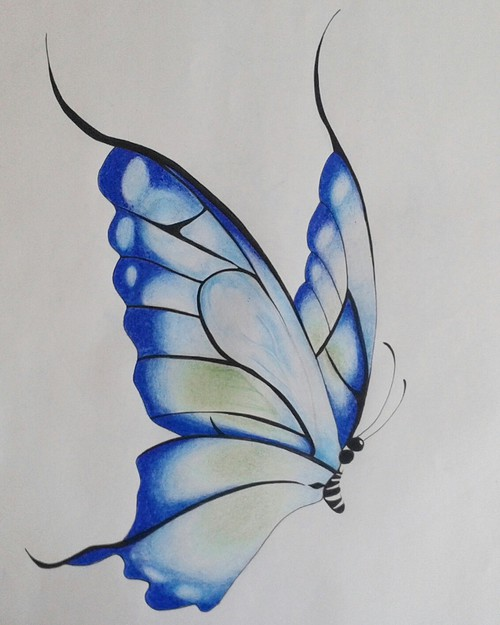 500x625 My Butterfly Drawing Discovered By The Drawer