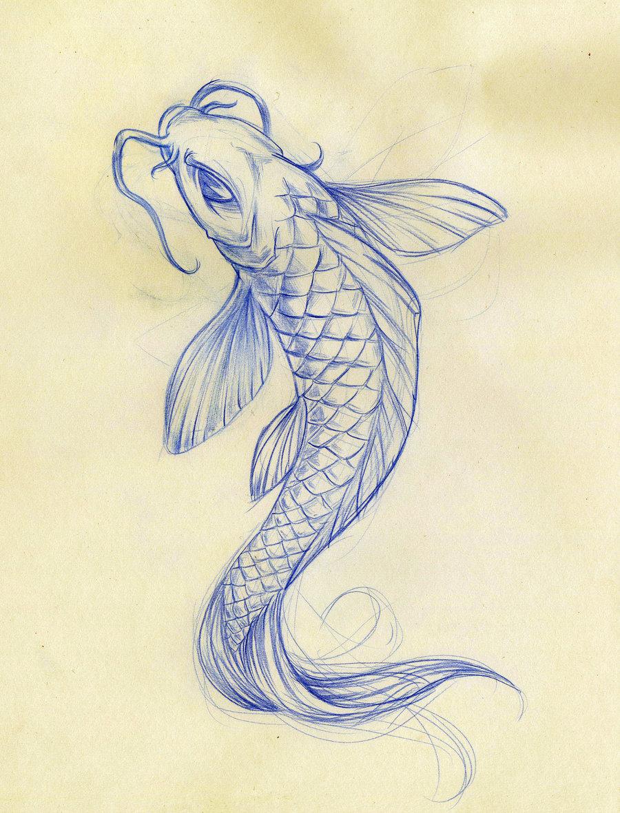 900x1181 8 Good Koi Fish Drawings In Pisces