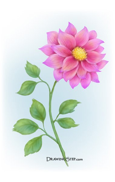 380x600 How To Draw A Flower Step By Step