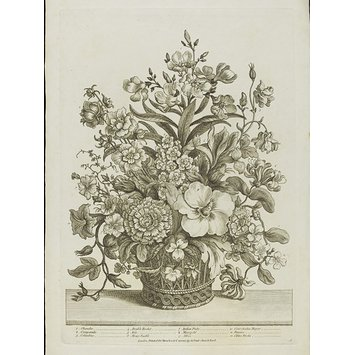 355x355 A Select Collection Of The Most Beautiful Flowers, Drawn After