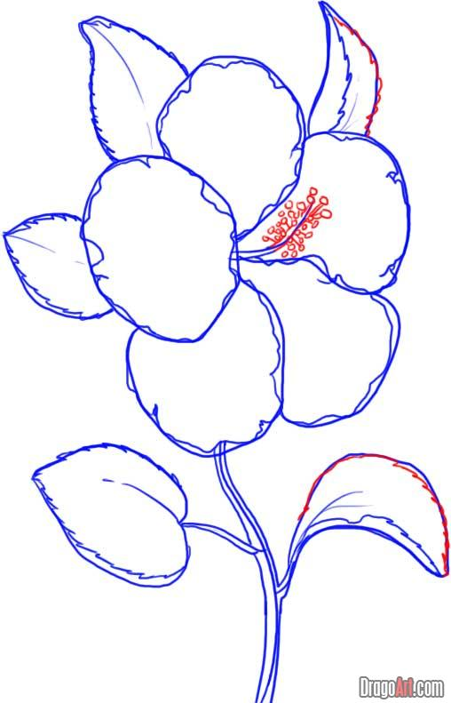 508x791 Drawn Hibiscus Beautiful Flower